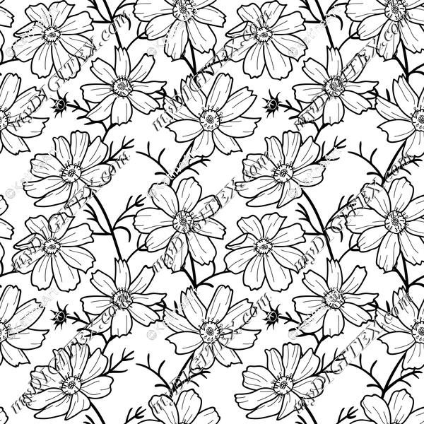 cosmos flower black and white