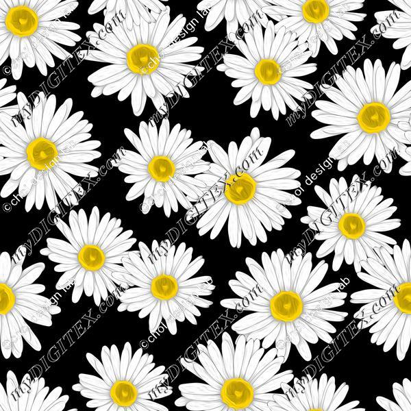 my dear daisy_black