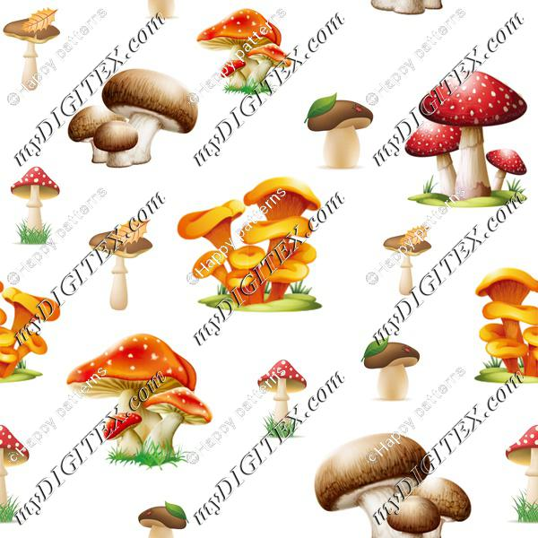 Forest mushrooms on White Autumn