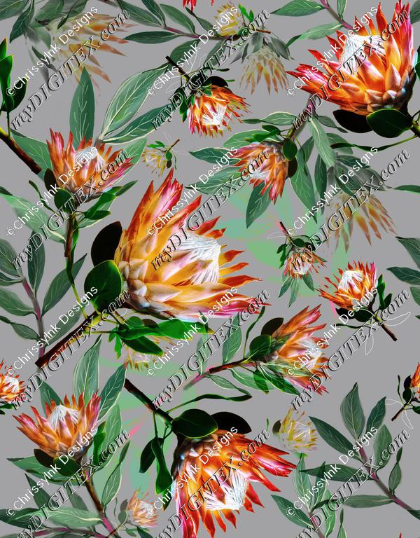 King Protea Flowers Botanical