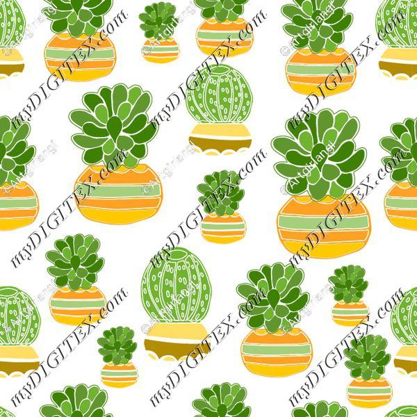 cactus with round planters