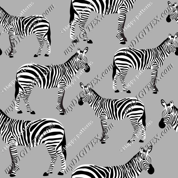 Zebras on Grey