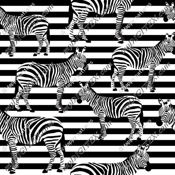Zebra on Stripes