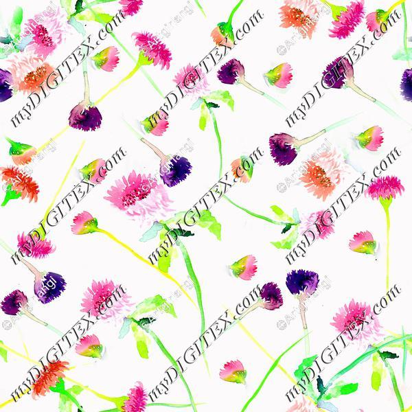 Wildflower white background