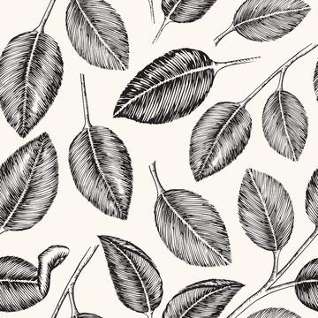 BW Leaves