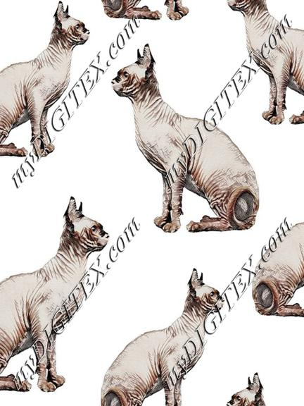 Hairless cats sphynix cats