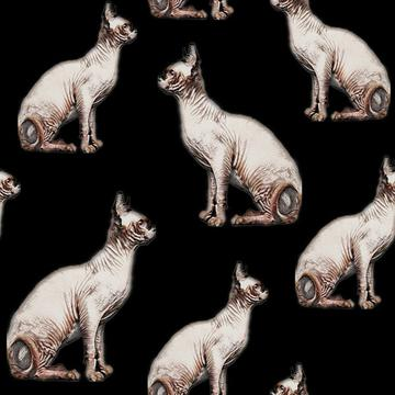 Cats, Hairless cats, sphynix cats