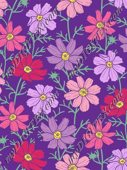 cosmos flower purple