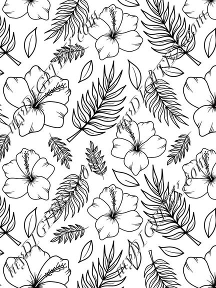 Hibiscus b lack nad white