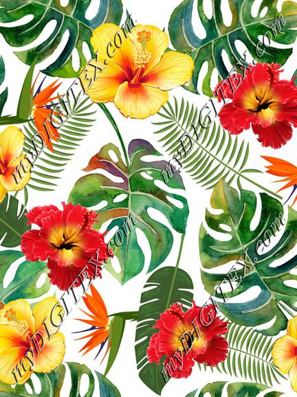 Tropical leaves and flowers on white