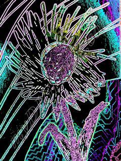 Neon sunflower