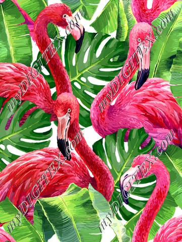 Flamingos (on white)