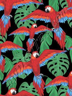Parrots (on black)