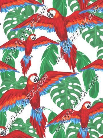 Parrots (on white)