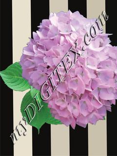 Floral stripes 1