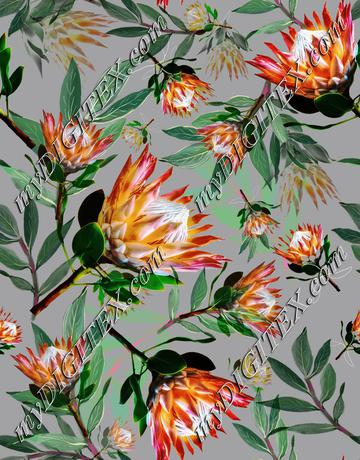 King Protea Flowers Botanical