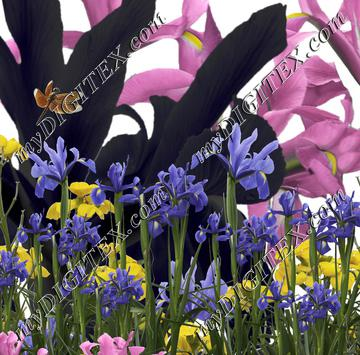Irises and Dragonfly
