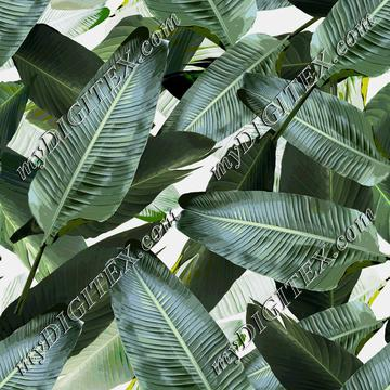 Palm Banana Leaf REPEAT