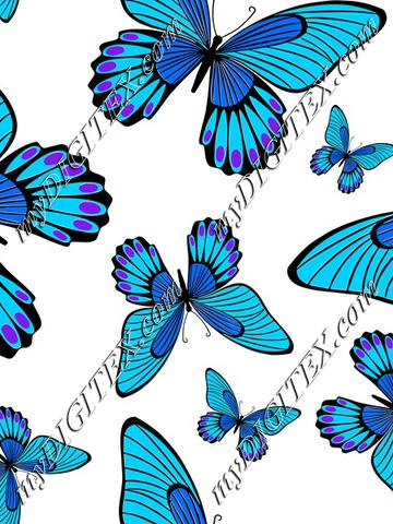 Blue Morpho Butterflies on White