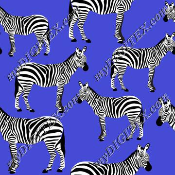 Zebras on blue