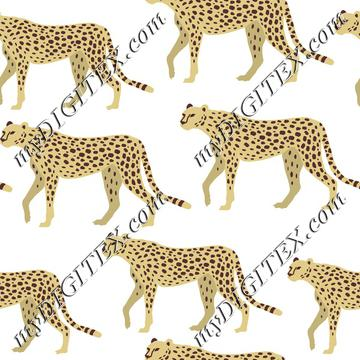 Cheetah, Leopard, Panther on White