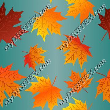 Autumn leaves,Fall Maple Leaves