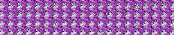 Aladdin Purple