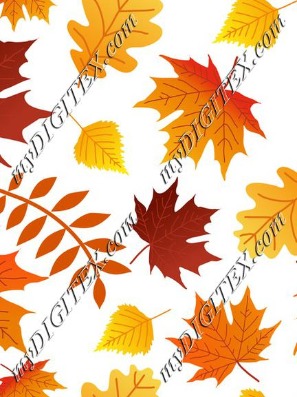 Autumn Fall colorful leaves, Maple leaves
