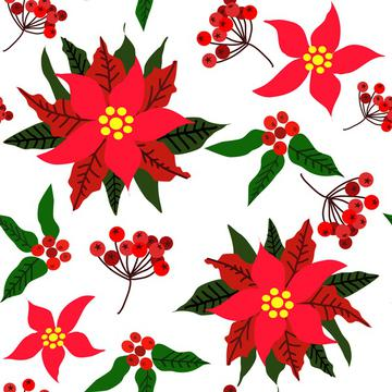 Christmas Star Flower,Red Berries and Green Leaves Ponsettia Flower on white