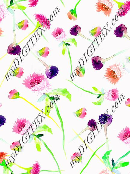 Wildflower white background