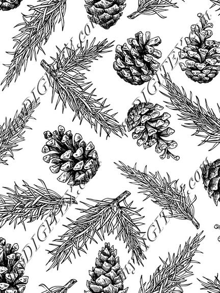 Fir and pine cone